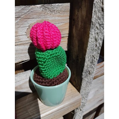 Cactus met bol