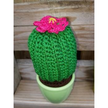 Bol cactus